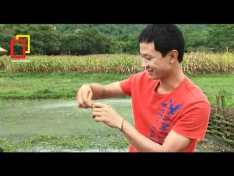 """SVN 2012 SMDT Lên xứ Mường học nấu món """"nhái đồ"""""""
