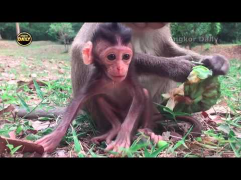 Thumbnail: Beautiful Baby Monkey with young Mother. [Angkor Daily148