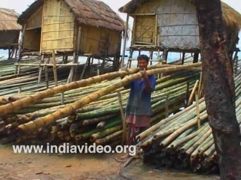 bamboo and assam Bamboo shoots food of assam, guwahati, india 984 likes 1 talking about this 6 were here bamboo shoots.