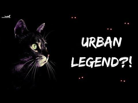 Black Cat of Killakee : Urban Legend?! **Documentary**