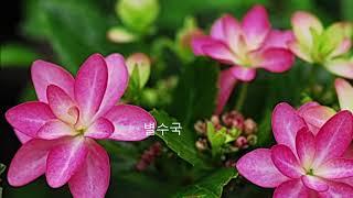 박근묵이 5월에 만난 꽃과 풍경