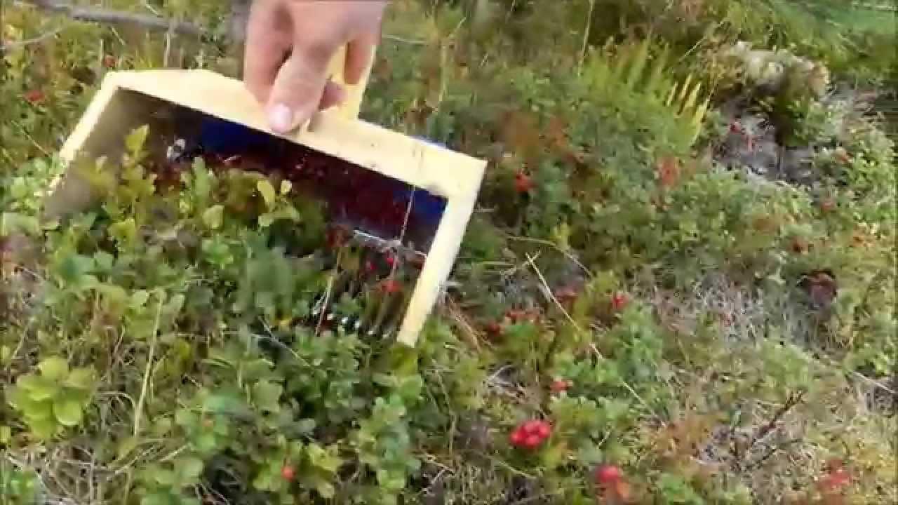 Комбайн для сбора малины и ежевики. Применение: — комбайн для сбора малины и ежевики сконструирован, как самоходный сельскохозяйственный агрегат, который осуществляет сбор фруктов с помощью системы вызова вибрации в верхушке дерева, что приводит к опаданию плодов. Такой метод.