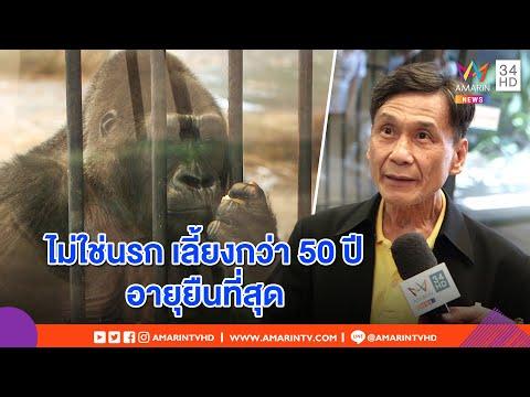 """ทุบโต๊ะข่าว:หยุดใส่ร้าย กอริลล่า""""บัวน้อย""""ตกนรก!พาต้า เปิดสวนสัตว์โต้สื่อนอก ยันเลี้ยงอย่างดี19/07/62"""