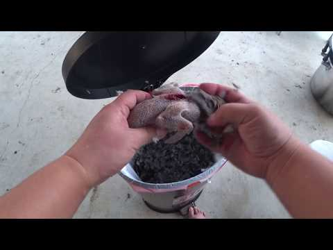 TX200 Dove Hunting Shoot, Clean & Cook