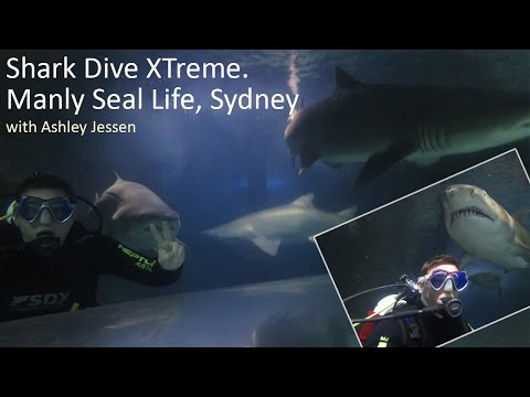 Shark Dive MANLY SEA LIFE - Diving with Sharks in Sydney with NO CAGE