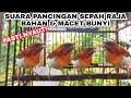 Suara Pancingan Sepah Raja Gacor  Mp3 - Mp4 Download