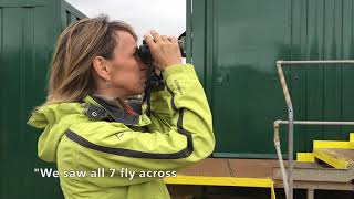 Bee-eater watching with Michaela Strachan