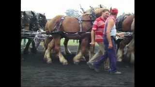 Naessens 2 - A team of 72 draft horses