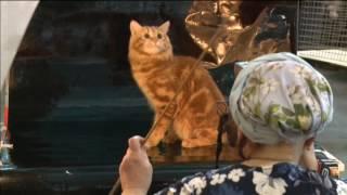 Rusia celebra una de las mayores ferias internacionales de gatos del mundo