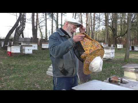 Вопрос: Кто в России начнёт гибнуть вслед за пчёлами Что Вы об этом думаете?