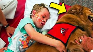 Download Sick Boy Says 'Goodbye' To Dog, But A Miracle Happens When The Dog Lays Next To Him...