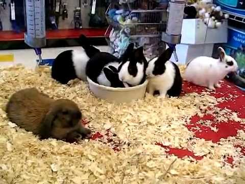 Petsmart Baby Rabbit Food