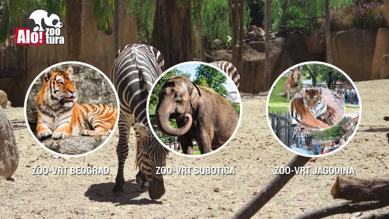 Alo! poklon: Besplatne ulaznice za zoološke vrtove u Beogradu, Subotici i Jagodini