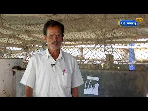 இயற்கை வழி விவசாயத்தின் உயிர்நாடி 'ஜீவாமிர்தம்' குறித்த தகவல்கள் | organic farming | Agriculture