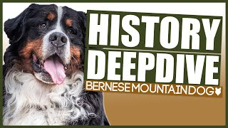 BERNESE MOUNTAIN DOG HISTORY DEEPDIVE
