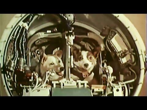Belka and Strelka in space (Белка и Стрелка в космос)