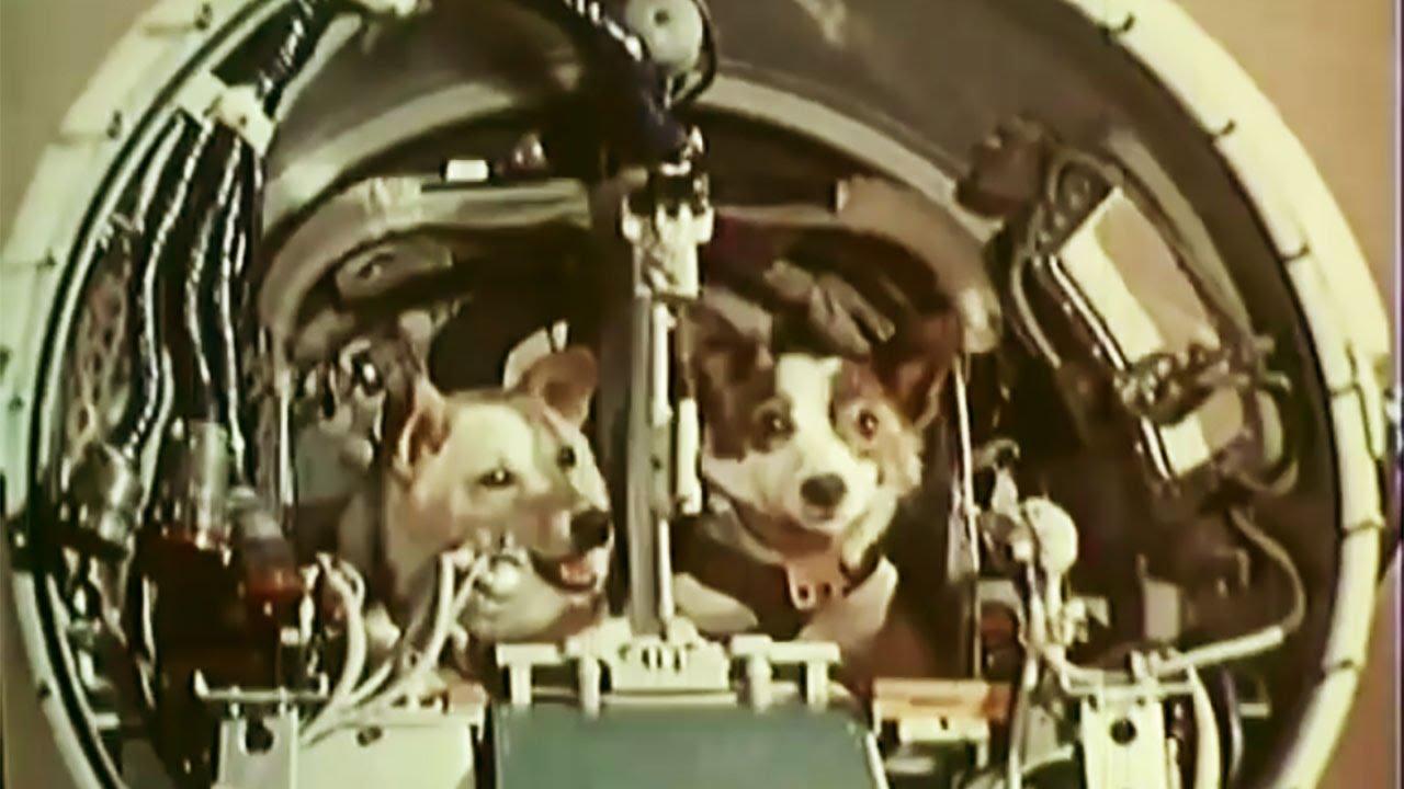 Belka and Strelka in space (Белка и Стрелка в космос ...