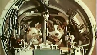 Belka and Strelka in space (Белка и Стрелка в космос)