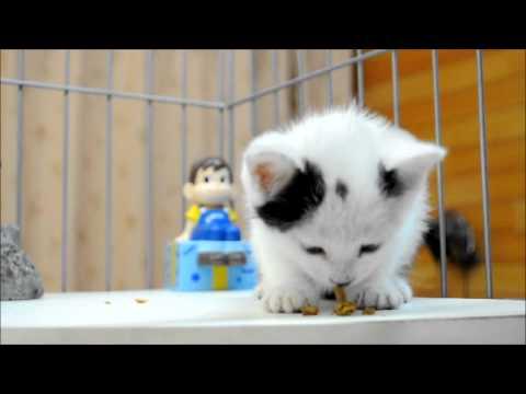 子猫専用カリカリをあげてみました。