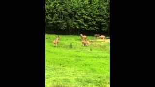 Six Flags Great Adventure Safari Off Road Adventure Part 2