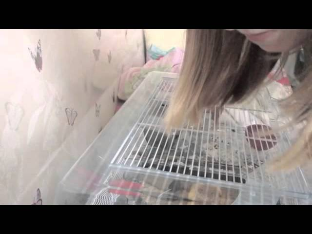 Pets At Home 50 00 Hamster Cage Review Youtube