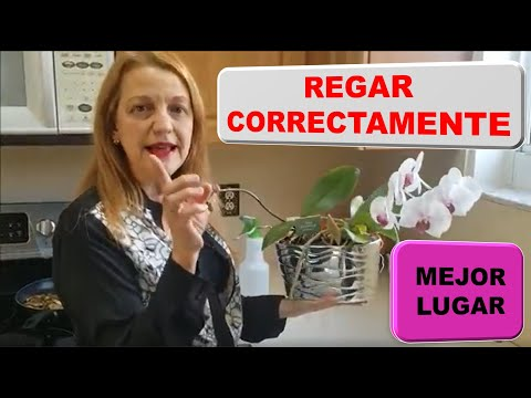 Conoce secretos para que las flores de orqu�deas duren m�s. Episodio 81