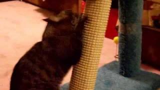 Кот осматривает котовскую мебель.(, 2007-11-24T20:09:14.000Z)