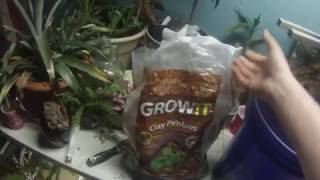 make a bioactive terrarium