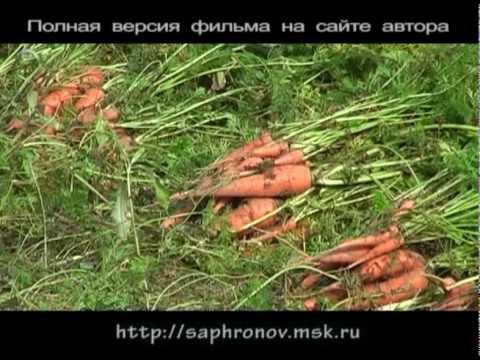 Огород (морковь-лук) в родовом