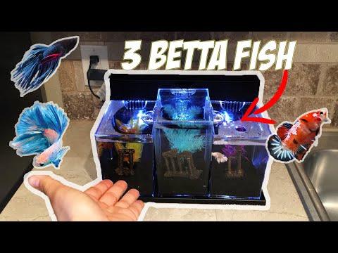 *NEW* TRIPLE OVERFLOW BETTA Fish TANK SETUP! (2.5 gallon aquarium)