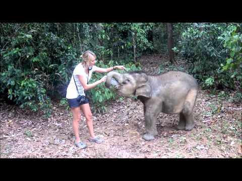 Thumbnail: Feeding one hungry little baby elephant, Bona