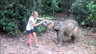 Video Feeding one hungry little baby elephant, Bona download MP3, 3GP, MP4, WEBM, AVI, FLV September 2018