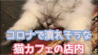 コロナで潰れそうな猫カフェの店内【京都猫カフェうたねこ堂】