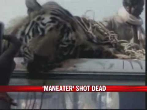Maneater shot dead in Chandrapur