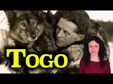 TOGO | La historia REAL de Seppala, Togo, Balto y la Carrera del Suero | Alaska