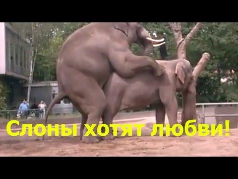 Слоновья любовь в зоопарке за 1 минуту.