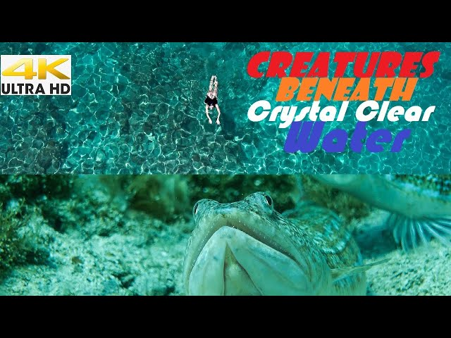 Spearfishing 🇬🇷  🥶CREATURES BENEATH Crystal Clear WATER🔥CATCH and COOK - Dusky Grouper Souvlaki✅