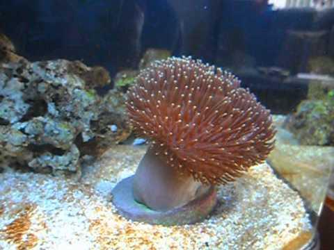 Plafoniere Per Nanoreef : Primo nanoreef litri forum acquariofilia facile allestimento