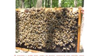 Как пчелы делают мед(, 2014-01-14T09:36:05.000Z)