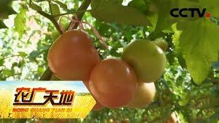 《农广天地》 20190429 优质农资助丰产| CCTV农业