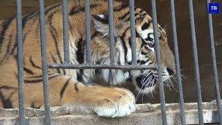М-ТВ новости. Зоопарк диких животных. Михайловка-ТВ.