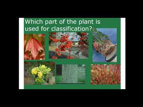 Module 1 Woody Plant Terminology and Identification