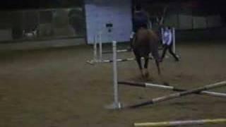 Horses - Cosmic Castaway
