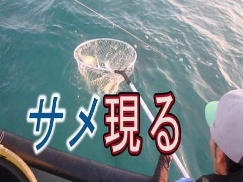 【サメ現る】漁に出てみた。2話【大漁 沖縄 延縄】