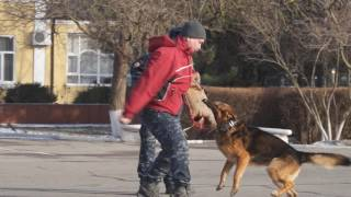 Ростовская школа служебно-розыскного собаководства