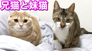 寝室でダラける猫たちが平和すぎた
