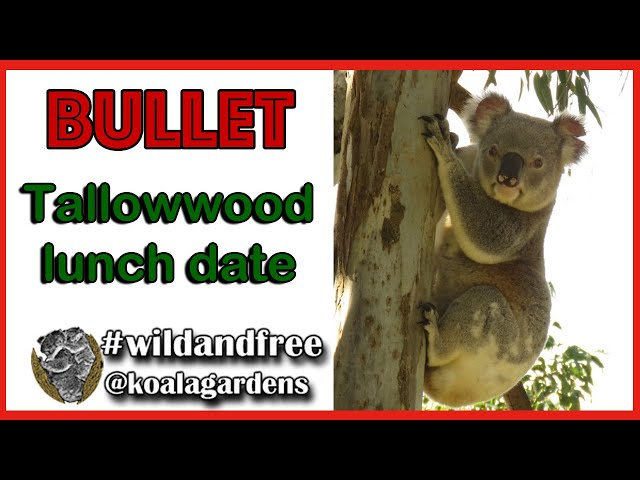 Bullet - Tallowwood lunch date May 2020