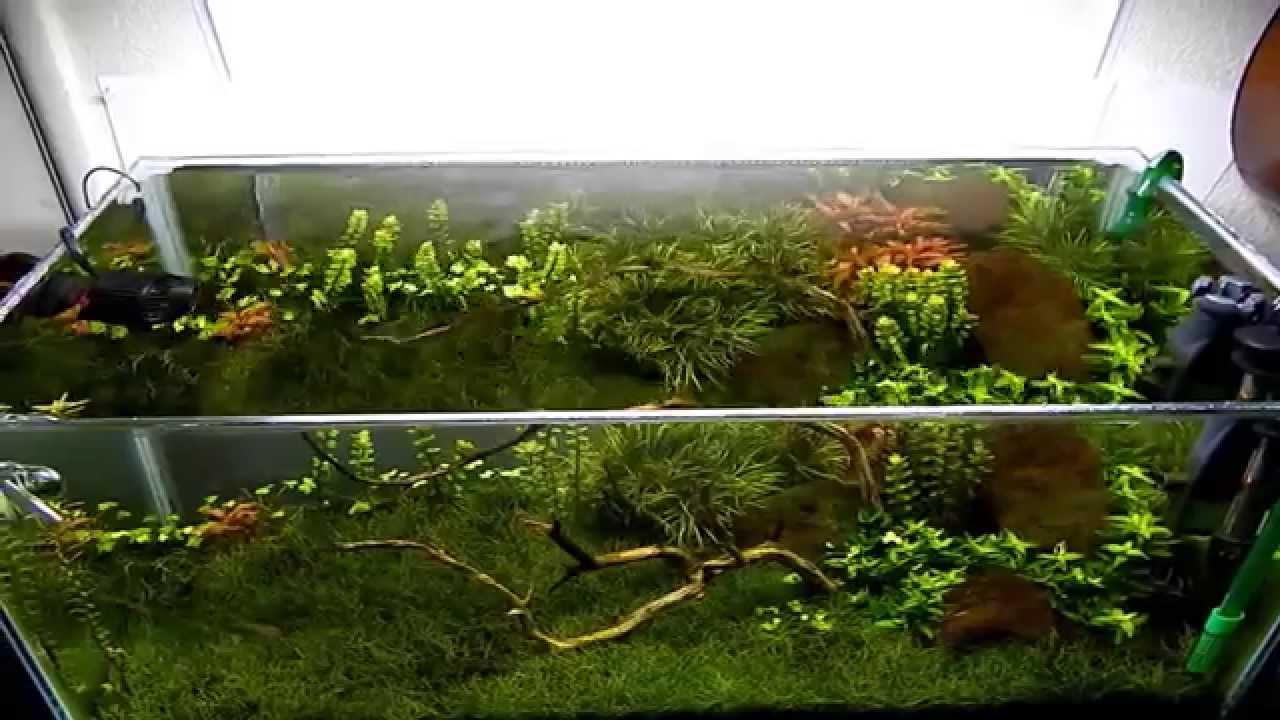Planted aquarium 20 gallon long youtube for 20 gallon long fish tank