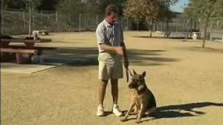 Basic Dog Training Tips : How To Train A Dog To Heel