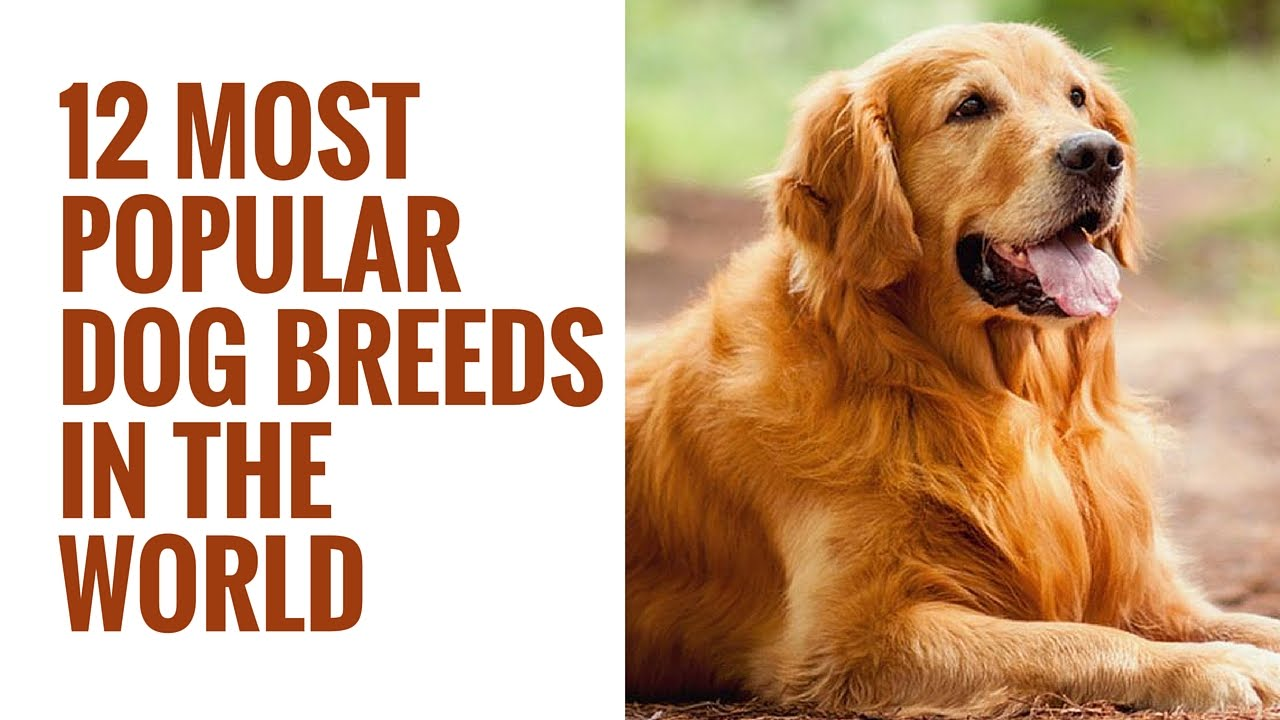 12 Most Popular Dog Breeds In The World | 12 Different ...